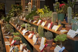 2016 Boston Flower Show Am Hort Competition