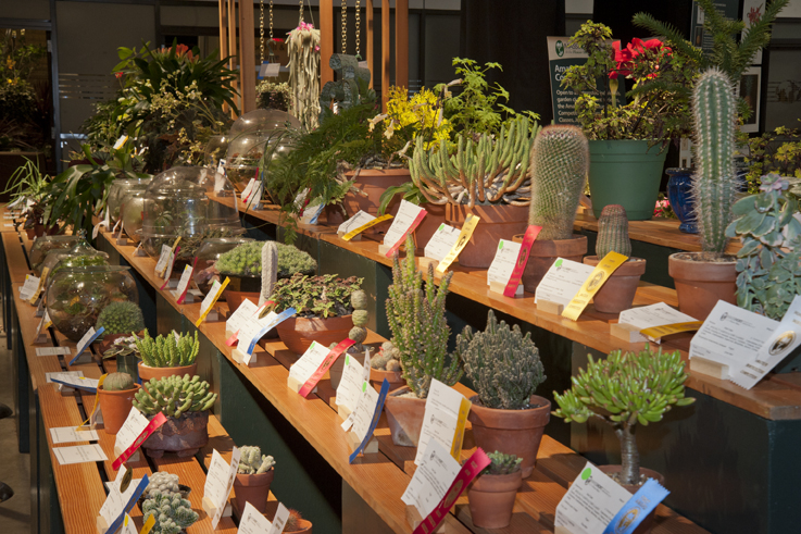 Hotels In Boston >> Boston Flower & Garden Show Competitions