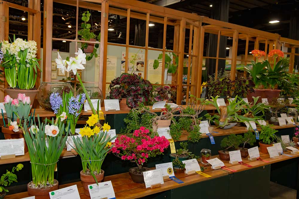 Boston Flower And Garden Show 2020.Competitions Invitationals 2019 The Boston Flower